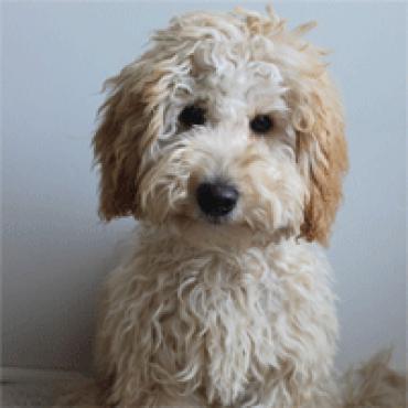 Thebe zet puppy op loonlijst