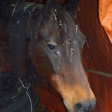 Paard in verpleeghuis
