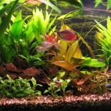Aquarium met vissen: goed voor de eetlust